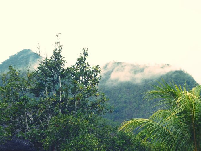 Forest Mountains Mountain Tree Fog Tranquil Scene Scenics Tranquility Beauty In Nature Foggy Environment Landscape Non-urban Scene Nature Growth Tourism Travel Destinations Remote Physical Geography Geology Mountain Range Plant