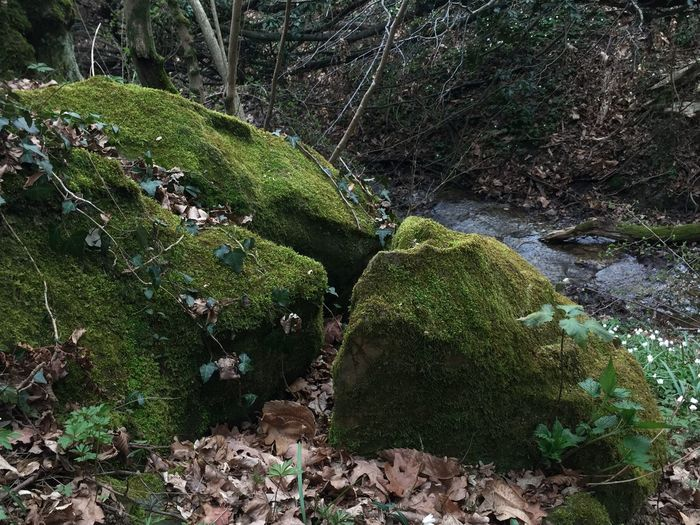 Moss growing on rock in forest