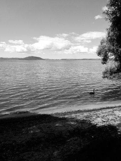 Lake rotorua trying a black and white photo