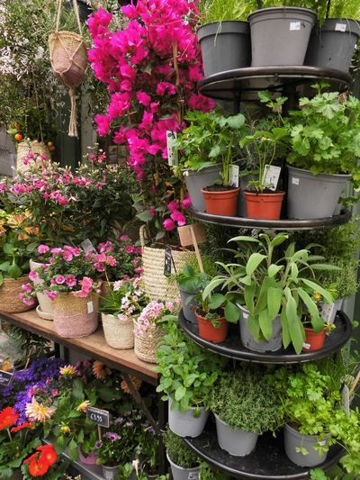 Potted plants in pot for sale