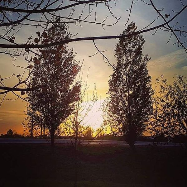 Nature Natureza Naturelovers Leafs Tree Colors Colorful Cores Autumn Winter Bluesky CeuAzul Unescoworldheritagesite Évora  Alentejo Sun Sunset Clouds Cloudy Landscape Paisagem Paisagemalentejana Fimdetarde Endoftheday Endoftheafternoon sunsets goldensky goldenhour pordosol