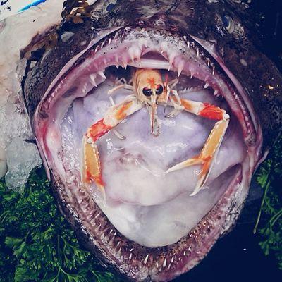 Big Mouth Fish IPSContest Love Tweegram instagood photooftheday iphonesia instamood igers instagramhub picoftheday instadaily bestoftheday igdaily instagramers webstagram follow statigram life