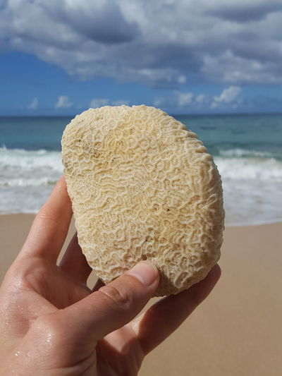 Corale Coral Koralle Stone Grenada Human Body Part Human Hand Beach One Person Holding Sea Sand Human Finger Water Close-up Outdoors Sky Day Freshness Nature