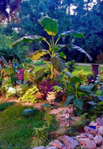 Tropical Getaway  Across Street Banana Tree Little Fish Pond Solar Lights At Night