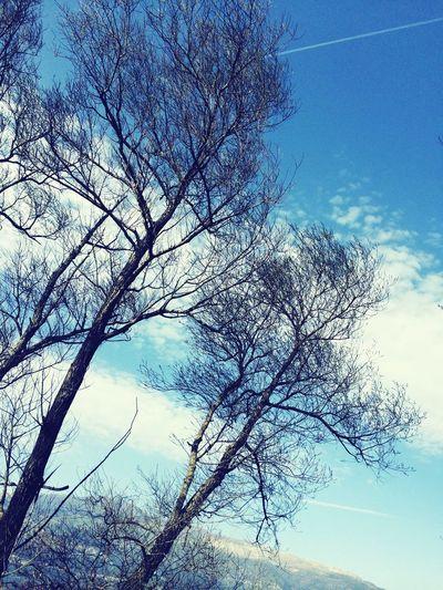 Tree Trees Sky Trees And Sky Clouds Clouds And Sky Beautiful Nature Sunny Day Day http://www.youtube.com/c/IIBraingasmIIAZ