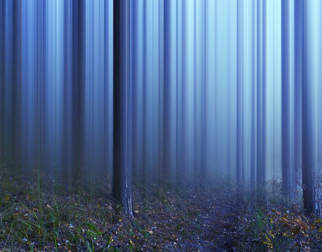 Krzysztof Tollas Beauty In Nature Dawn Fog Forest Light Nature Nikon D3100 Rezerwat - Kuźnik