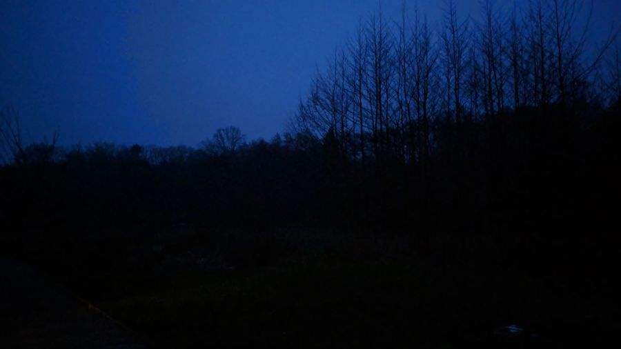 Nightfall. Walsrode Stellichte Germany Nightfall Dusk Blue Hour Blue Black Black And Blue Mystery Mysterious Outdoors Quiet Calm Silence Nature Beauty In Nature Beauty Simplicity Astronomy Tree Forest Silhouette Star - Space Sky Landscape