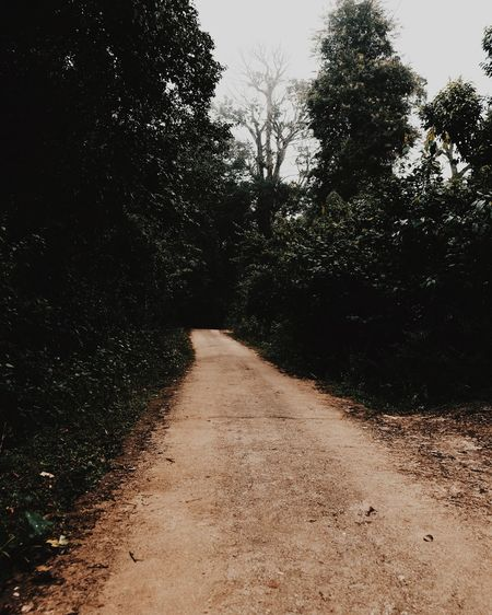 Dirt road along trees in forest