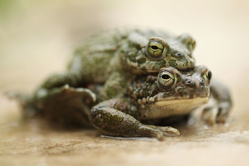Close-up of frog on land