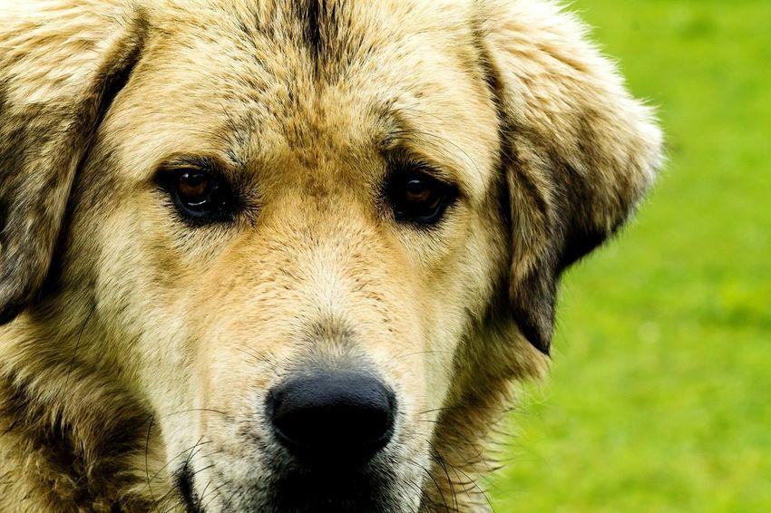 Royalcanin Dogsofeyeem Caninecuties Canine Love :)