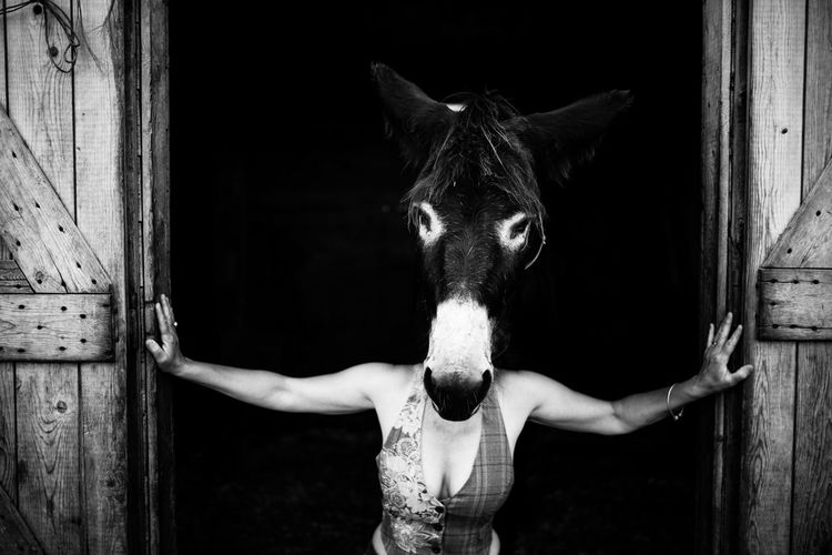 Woman hiding face behind donkey head at barn