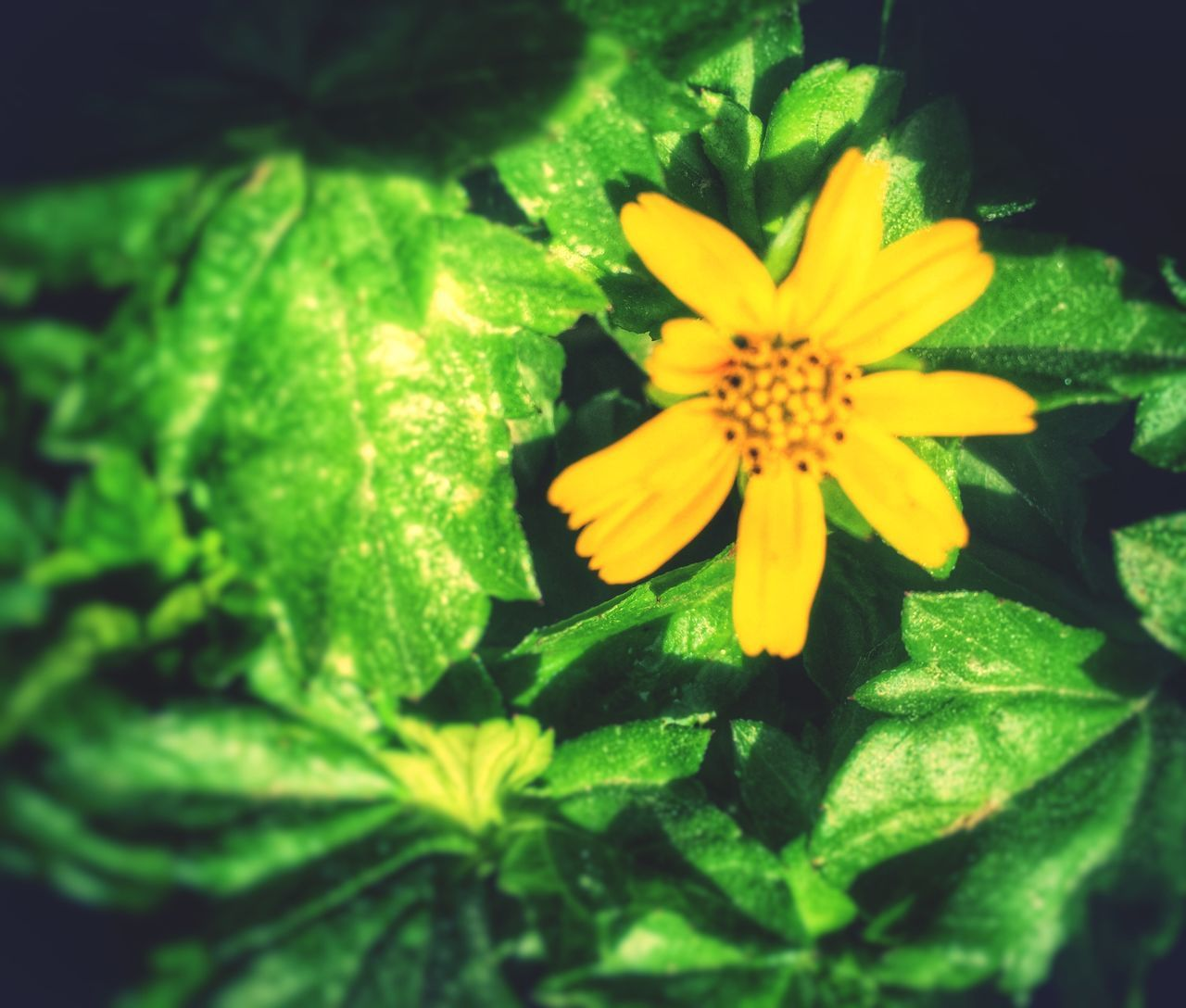flower, yellow, beauty in nature, nature, petal, fragility, growth, flower head, freshness, plant, green color, no people, blooming, outdoors, close-up, day
