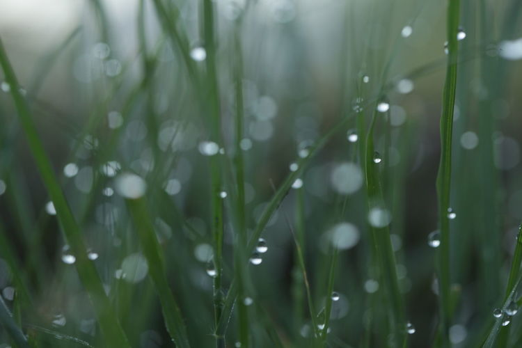 Close-up of water drops on grass