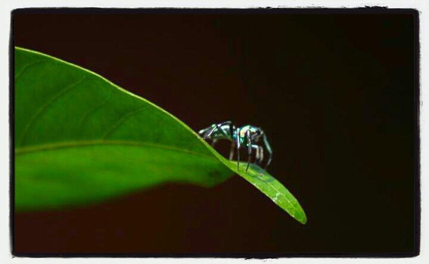 Art Spider TheMinimals (less Edit Juxt Photography)