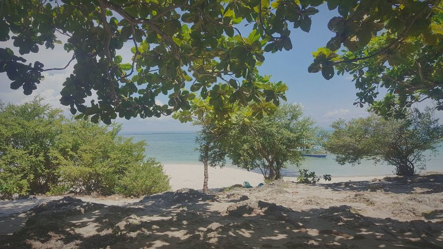 Shady... Tree Nature Water Scenics Beach Beauty In Nature Landscape Tranquility Outdoors No People Growth Day Sea Sunlight Sky Plant Sand Nature The Week On EyeEm Philippines Adventure Vacations Cloud - Sky Travel Destinations Beauty In Nature EyeEmNewHere