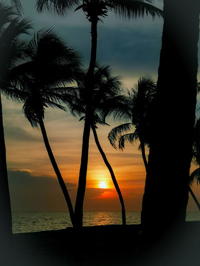 Silhouette palm trees against sea during sunset