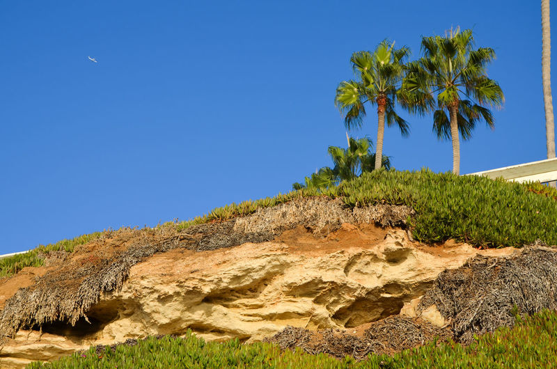 San Diego Arid Climate Beauty In Nature Blue Clear Sky Day Growth La Jolla Landscape Mountain Nature No People Outdoors Palm Tree Plant Sand Scenics Sky Sunlight Tranquil Scene Tranquility Tree Been There. California Dreamin