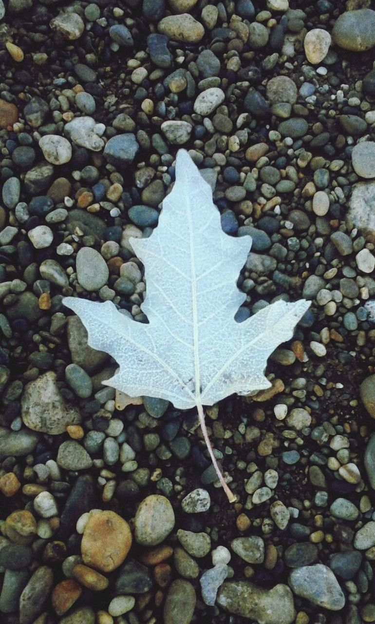 leaf, autumn, abundance, close-up, nature, pebble, day, outdoors, no people, beauty in nature, water, fragility, maple, freshness