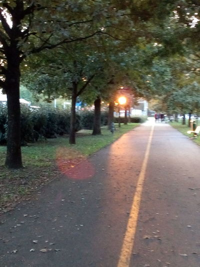 Road Walkway Street Light