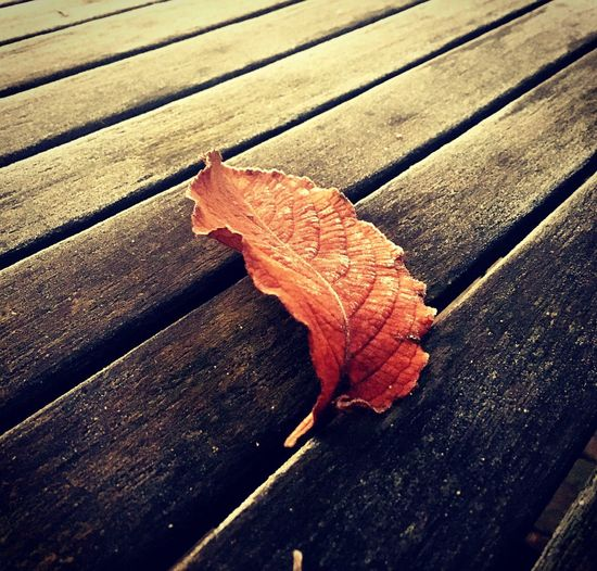 Leaf Autumn Wood - Material Leaf Vein Change Table No People Plank Boardwalk Nature Day Close-up Outdoors Maple Leaf