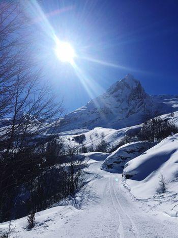 Snow Winter Cold Temperature Lens Flare Sunbeam Sun Sunlight
