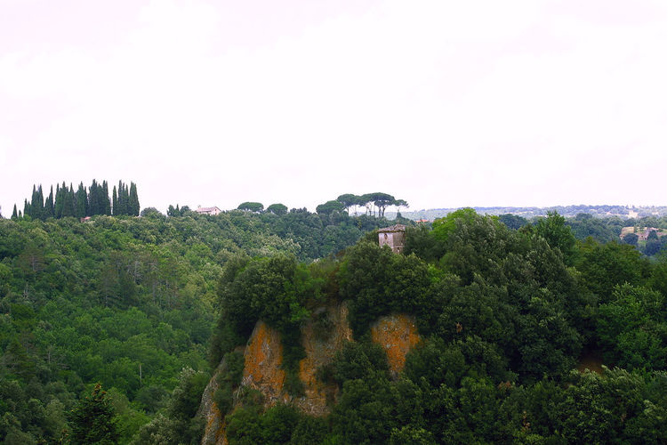 Landscape with woods and tuff cliffs Beauty In Nature Clear Sky Cliff Cypresses Etruria Forest Green Color Italy Landscape Lazio Mountain Nature Outdoors Pine Tree Scenics Sky Tranquility Tree Tuff Via Amerina