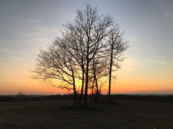 Soft sunset. Lone Majestic Landscape Bare Tree Isolated Sunset Tree Beauty In Nature Tree Trunk Tranquility Solitude Tranquil Scene Nature Field Scenics Silhouette Sky Branch Outdoors No People Forest Natural Simplicity EyeEmNewHere