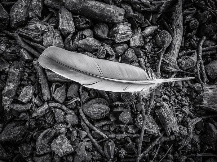 Feather  Fjer Bird Looking Down Nature Nature_collection Nature Photography The Great Outdoors - 2016 EyeEm Awards EyeEm Ground Level View Photo Photooftheday Black And White Black & White Nature Black&white EyeEm Best Shots Perspectives On Nature Black And White Friday