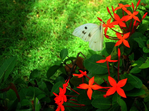 2007 Dominican Republic Dominicus Beach Beauty In Nature Blooming Butterfly - Insect Close-up Day Flower Focus On Foreground Green Color Growth Insect Leaf Nature No People Outdoors Petal Plant Red Red Flower