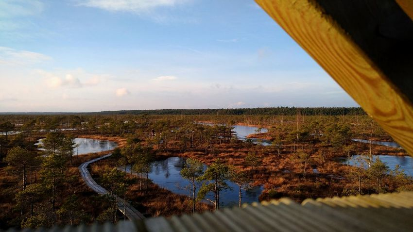 Photography Latvia Swamp Forest Photography Forest Wiev Wiev From Above Evening Clear Sky Wood Wood - Material Cold Temperature Spring Springtime Autumn Autumn Colors Frozen Liquid Experimental Photography Dopephotography Agriculture Nature No People Scenics Outdoors Sky Day Beauty In Nature Water Tree
