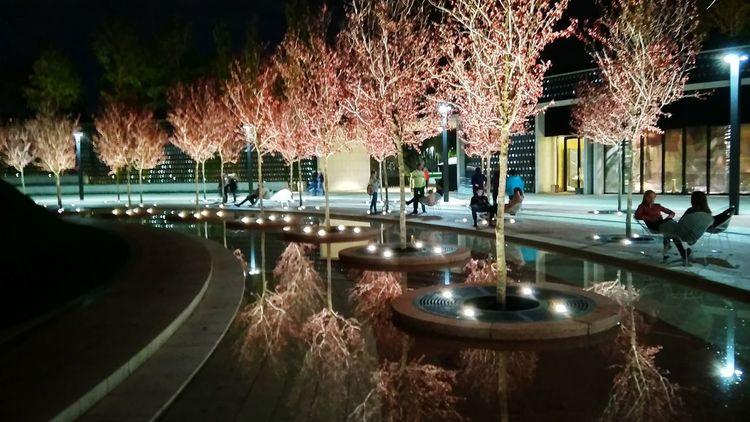 EyeEmNewHere Park Garden Night Mobilephotography Water Tree Illuminated EyeEmNewHere