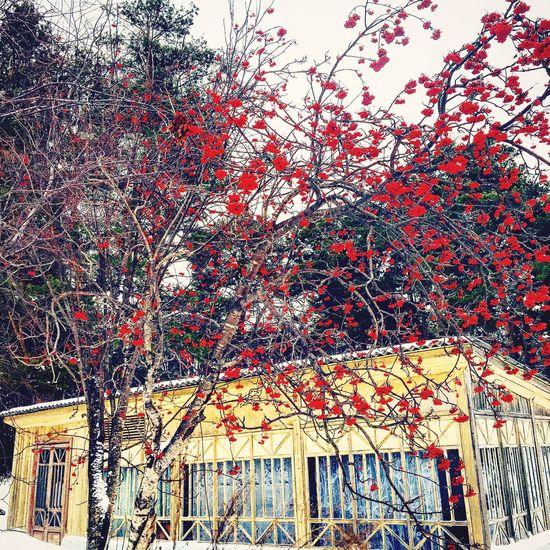 Ярких сочных красок 😍👆 Colors Всемудачногодня Beautiful Nature Working Beautiful яркиекраски Russia россия мойгород удачногодня Nature Mylife Новосибирск природароссии Природа