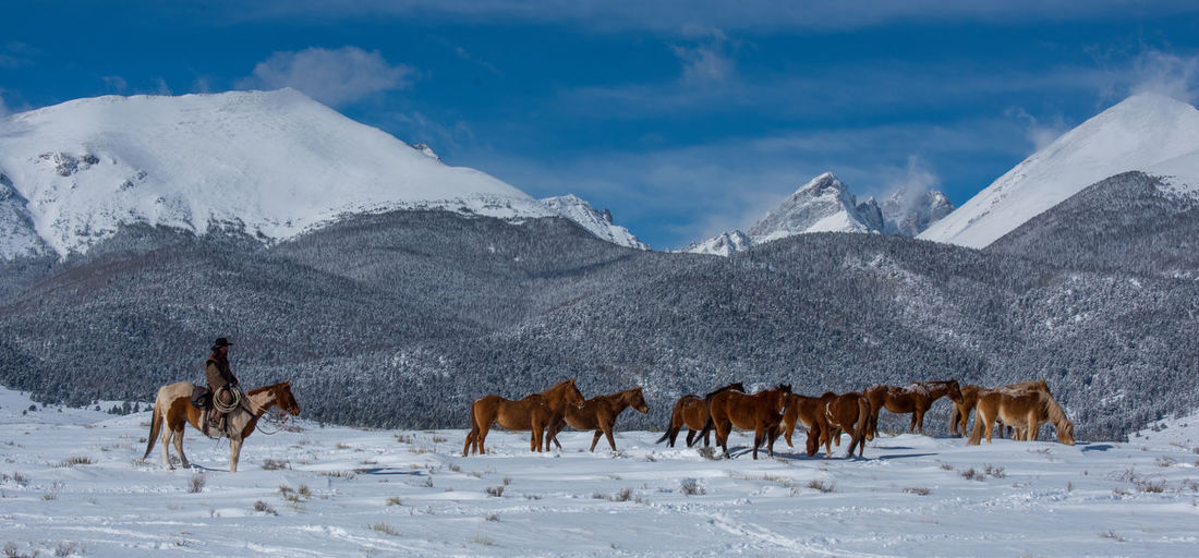 Ranching Winter Snowcapped Mountains Cowboy Snow Group Of Animals Herd Of Horses Cold Temperature Beauty In Nature Domestic Animals Sky Horse Land Environment Mountain Range Herbivorous Herd Scenics - Nature Animal Themes Mountain Ranch Life Snowcapped Mountain Mammal Animal Cloud - Sky