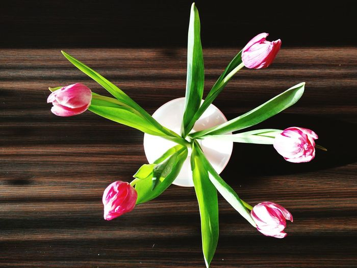 Directly above shot of tulips in vase on wooden table
