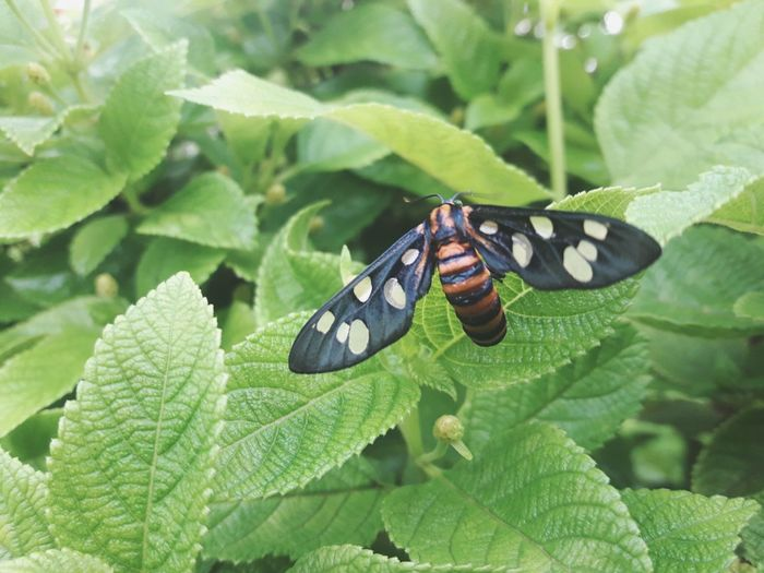 Insect Leaf Animals In The Wild Animal Themes Butterfly - Insect Animal Wildlife Nature Plant No People One Animal Green Color Outdoors Day Freshness Flower India Close-up Beauty In Nature Full Length