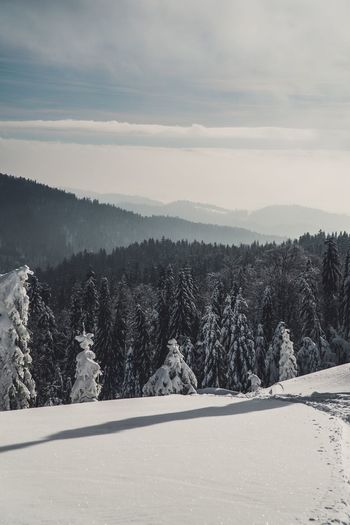 Beautiful Nature Mountain View Mountain Range Forest Snowy Mountain View Tree Snow Cold Temperature Winter Plant Scenics - Nature Mountain Nature Environment Beauty In Nature Sky Pine Tree Tranquil Scene Land Tranquility Coniferous Tree Pinaceae Landscape Forest No People
