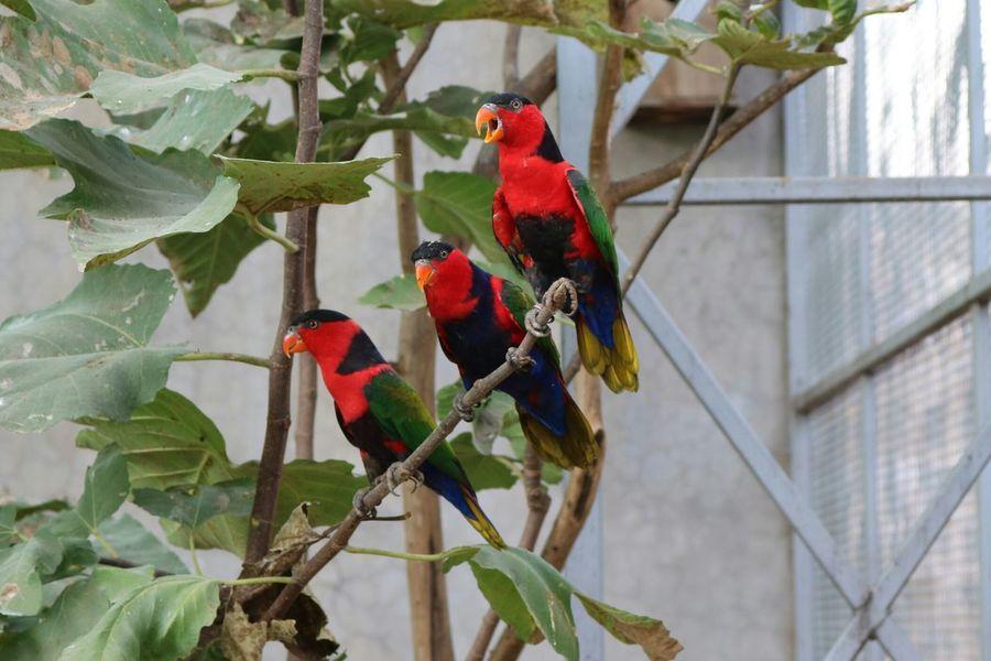 Perrot Red Bird Tree Nature Multi Colored Perrot 3,green,birds, Bird Singing Bird Photography Bird