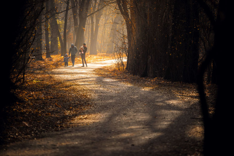 Man walking amidst trees in forest
