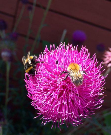 Summer Sweden Flowering Plant Invertebrate Animal Animal Themes