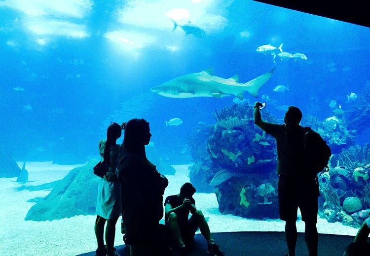 Capture The Moment Oceanário in Lisbon - Portugal People Photography Shark People Making Photos Fishes People Watching
