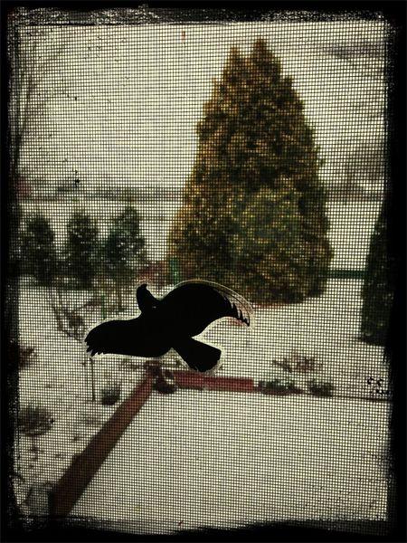 Es schneit immer noch und ein Vogel sitzt am Fenster