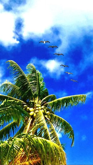 sea and peace... Flying Sky Low Angle View Nature Bird Beauty In Nature Beach Outdoors Paradise Animal Themes No People Animals In The Wild Beachphotography