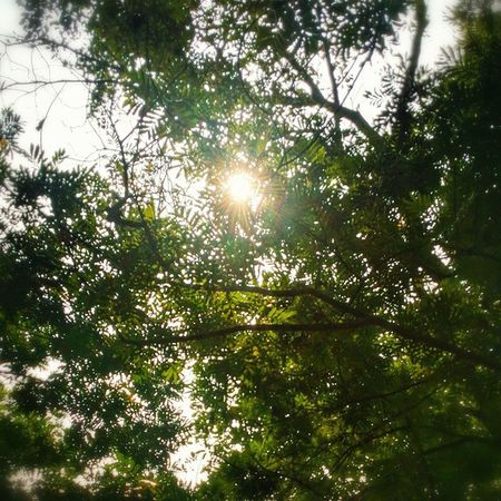 Tree Sun InstagramMV Malecity maldives