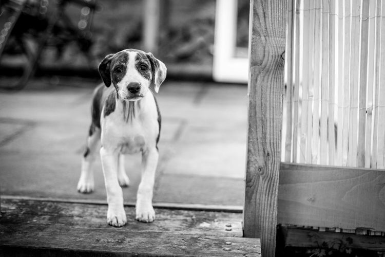 Portrait of dog on wood