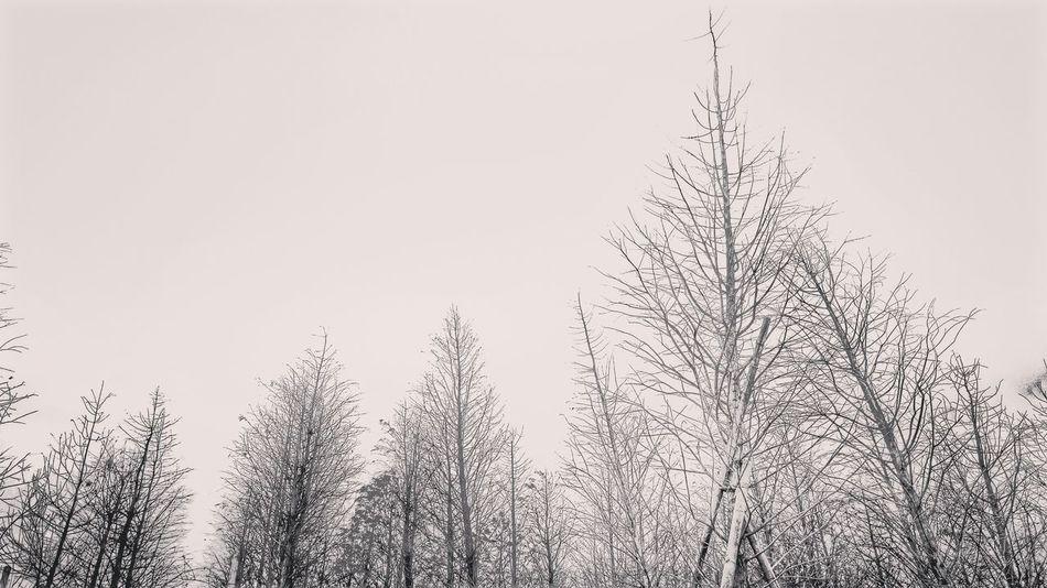 新家附近的秘境~Sky Outdoors Trees Monochrome Monochrome Photography Blackandwhitephotography Black & White