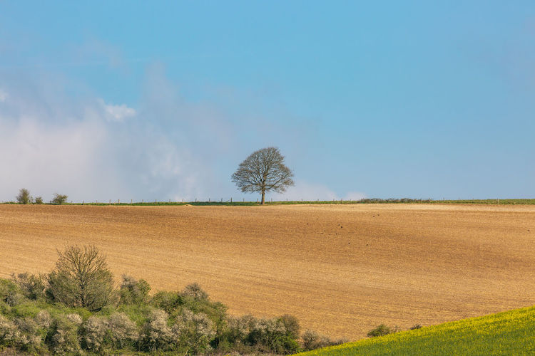 A tree on the horizon of farmland in the South Downs, on a sunny spring day Sussex South Downs Landscape Environment Sky Tranquil Scene Land Tranquility Plant Tree Scenics - Nature Beauty In Nature Field Nature Day No People Rural Scene Non-urban Scene Growth Blue Horizon Outdoors