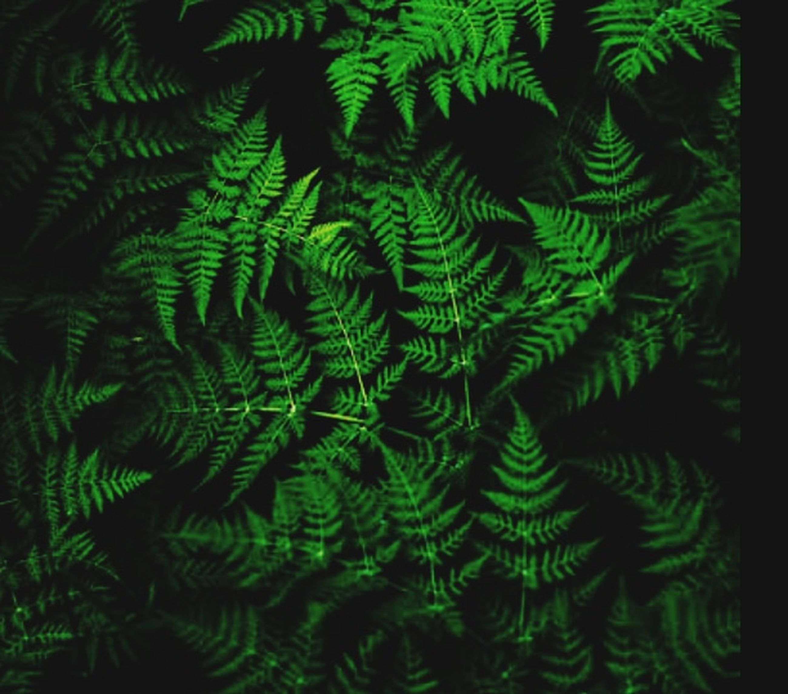 green, leaf, plant, tree, growth, nature, no people, backgrounds, pattern, fern, plant part, jungle, ferns and horsetails, full frame, close-up, beauty in nature