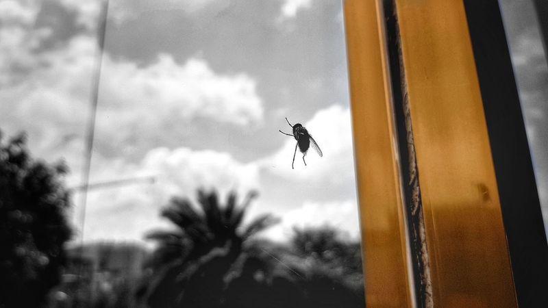the fly Window Ethiopia Ethiopian Photography A.A Flying Ethiopian Photography 🇪🇹