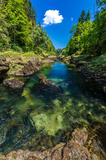 Traunfall Beauty In Nature Clean Day Flowing Flowing Water Forest Green Color Idyllic Nature No People Non-urban Scene Oberösterreich Outdoors Plant River Rock Scenics - Nature Sky Solid Tranquil Scene Tranquility Tree Upperaustria Water