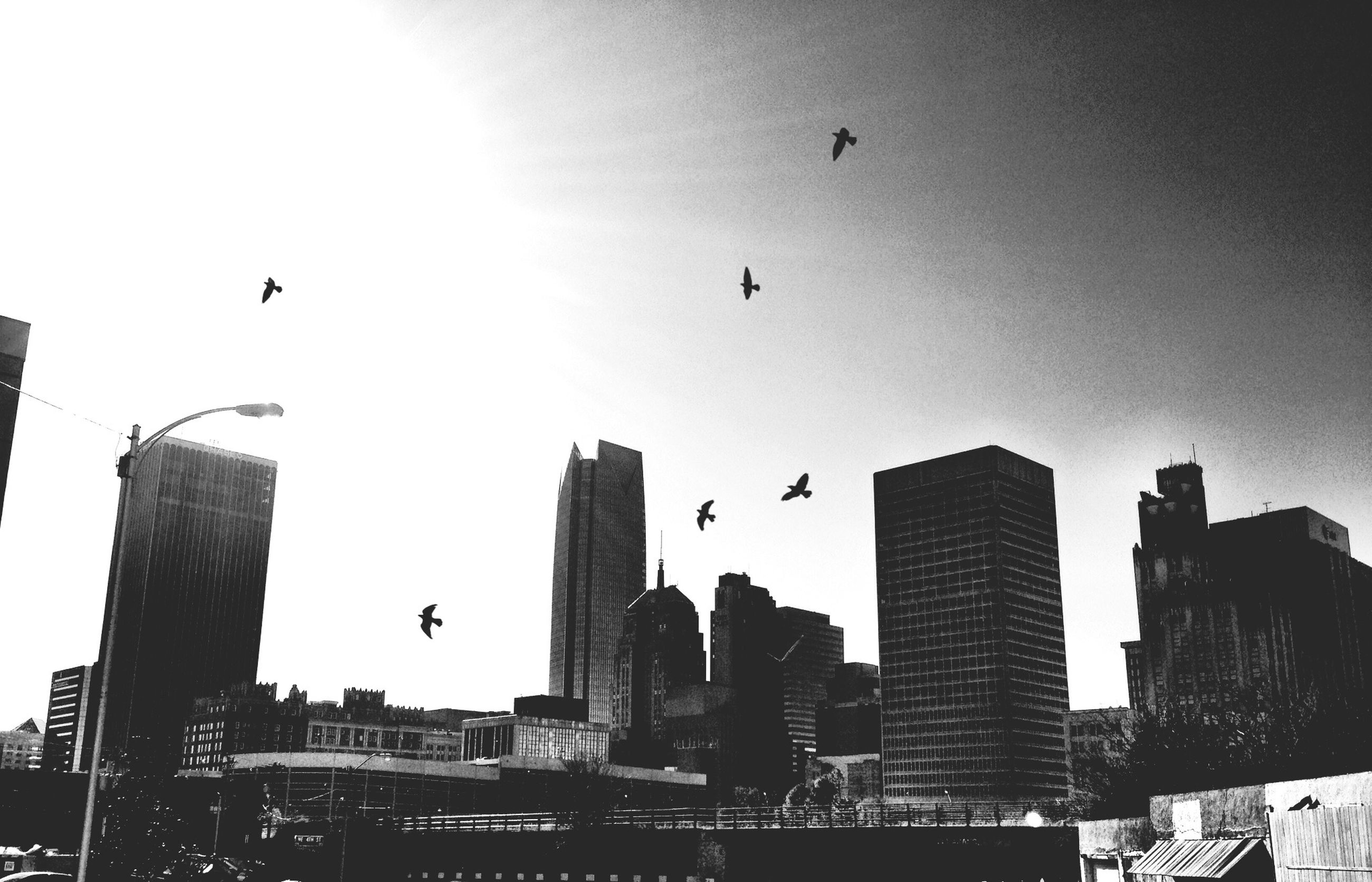 architecture, building exterior, built structure, flying, bird, low angle view, city, skyscraper, clear sky, animal themes, mid-air, modern, animals in the wild, sky, silhouette, sun, office building, wildlife, city life, building